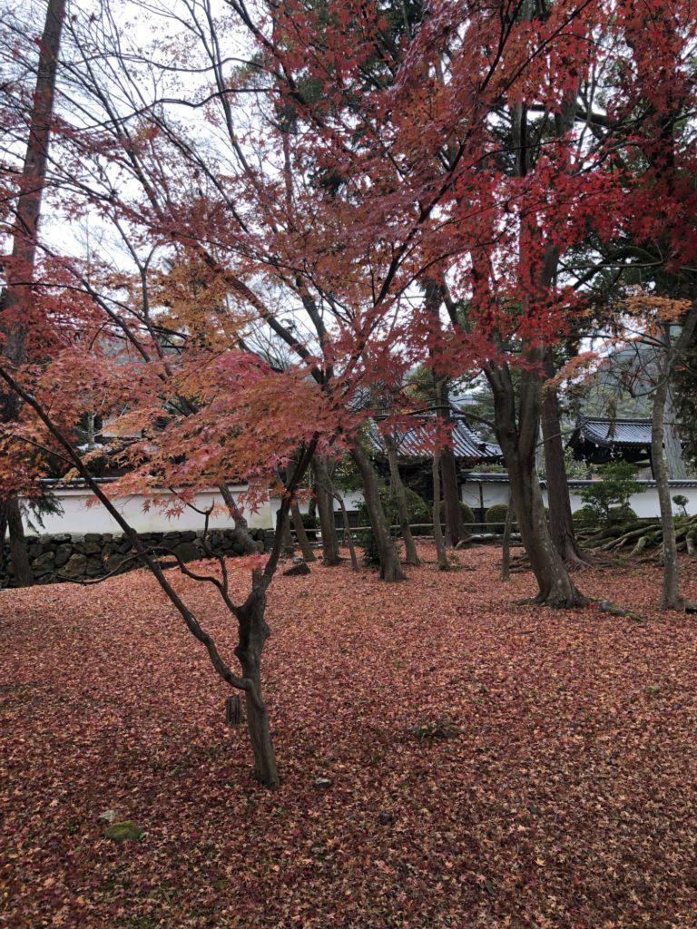 南禅寺、僧堂前の紅葉